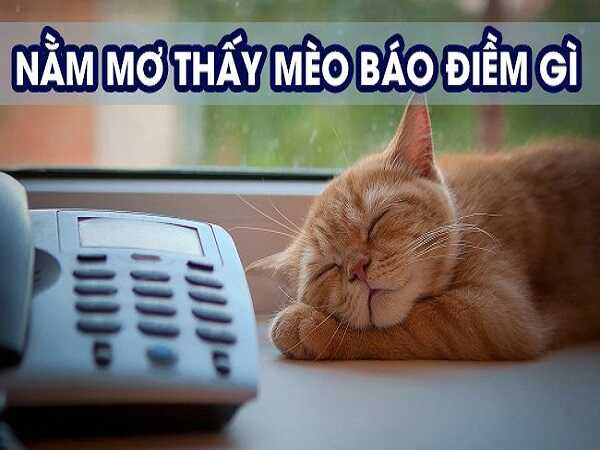 Giải mã giấc mơ thấy mèo, mơ thấy mèo đánh con nào