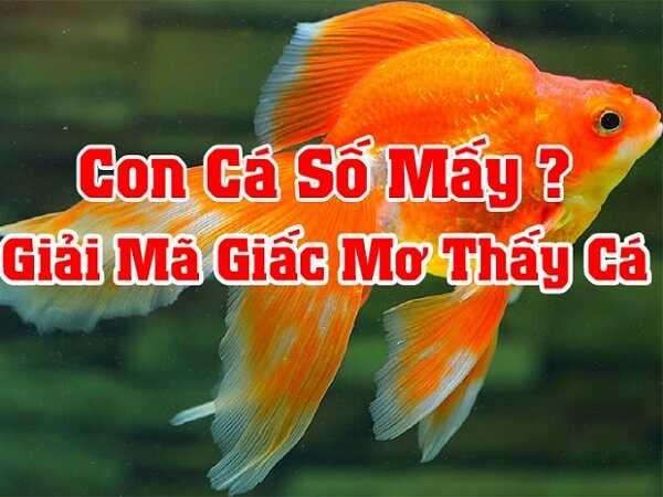 Giải mã giấc mơ thấy con cá, mơ thấy cá điềm báo điều gì