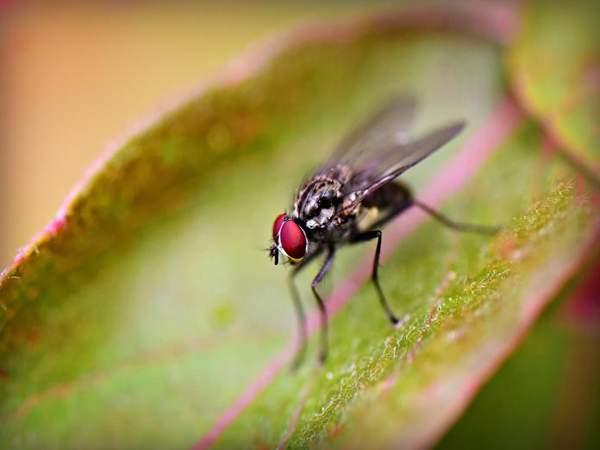 Con ruồi số mấy - mơ thấy con ruồi đánh số gì