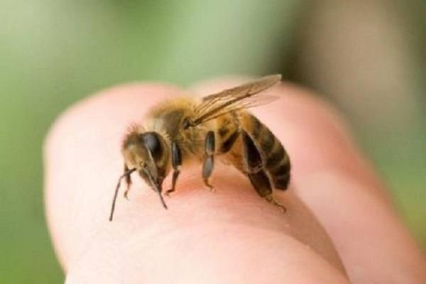 Bị ong đốt là điềm gì?
